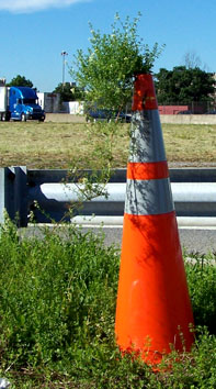 Proceed! Street Ragz Zone. 'The CONED PLANT.' If U open your eyes while walking in the streets you can see interesting things. This Orange Cone proves the stubborn resilience of Mamma Earth. She knows how to survive. This traffic cone (with a tiny opening in the top) has been sitting in place for at least a year. The covered weed-like wildflower that usually grows a foot or so, grew the height of the cone and crowned the pointy end of the street marker. Mamma Earth is alive around us!