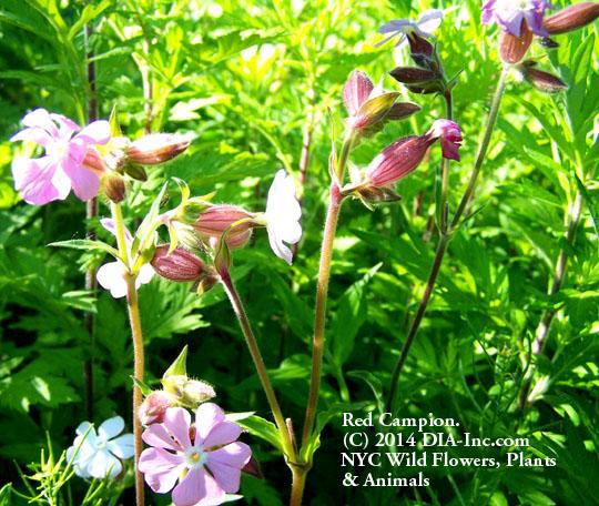 Street Ragz: Wild Plant Flower